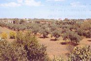 Immagine n9 - Cantina vinicola con beni mobili e terreno - Asta 9904
