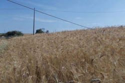 Agricultural land of       sqm - Lot 9969 (Auction 9969)