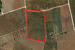 Cultivated land with olive grove of   ,   .   m  - Lote 9989 (Subasta 9989)