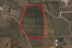 Cultivated land with olive grove of   ,    m  - Lot 9990 (Auction 9990)