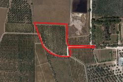 Cultivated land olive grove of   ,    square meters - Lot 9991 (Auction 9991)
