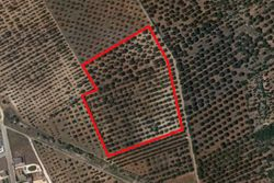 Cultivated land with olive grove of   ,   .   m  - Lot 9992 (Auction 9992)