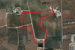 Cultivated land olive grove   ,    sq m - Lot 9994 (Auction 9994)