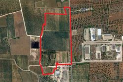 Cultivated land olive grove of    ,    square meters - Lot 9995 (Auction 9995)