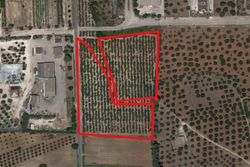 Cultivated land olive groves of   ,    square meters - Lot 9996 (Auction 9996)