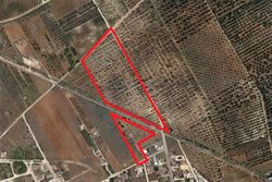Cultivated land olive grove of   ,    sq m - Lot 9997 (Auction 9997)