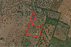 Cultivated land olive grove of  ,    sq m - Lot 9998 (Auction 9998)