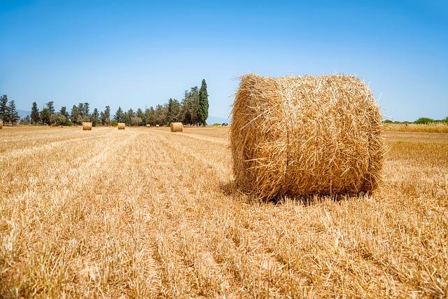 vendita terreni agricoli